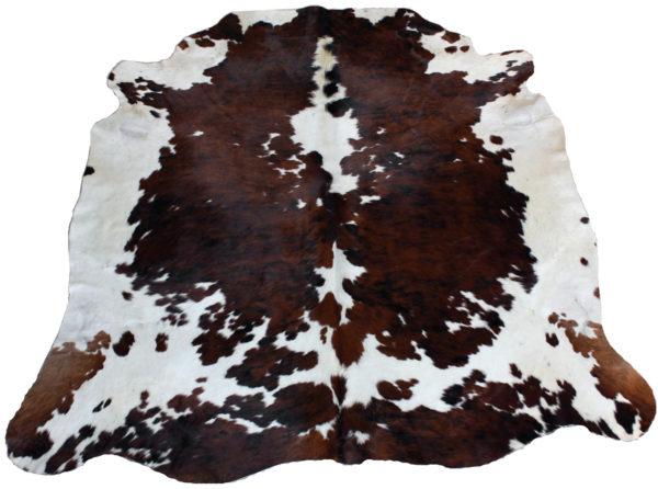 vache normande tachetée